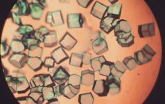 Lysozyme crystals copy2
