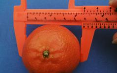 FruitTeaser