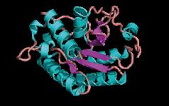 ProteinTeaser