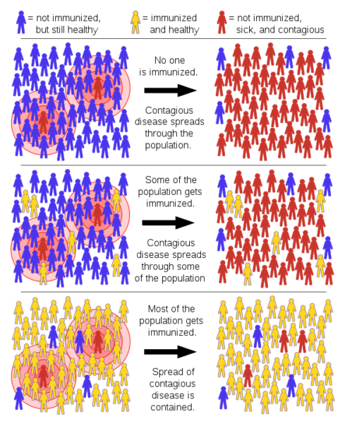 Herd immunity: when enough people are immune, there aren't enough susceptible people for the disease to spread.